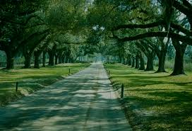 South Carolina landscapes images Quercus specimen avenue of live oaks south carolina landscape jpg