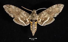 meaning of moth lightgrid lichtnetz reddeluz