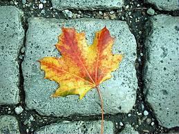 126 seasons autumn images fall nature