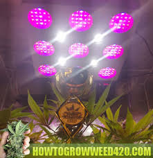 best light to grow pot how to grow weed official growing elite marijuana download