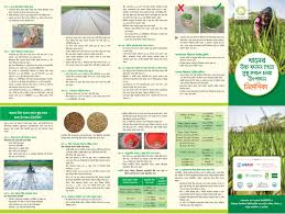 cereal systems initiative for south asia csisa factsheets and