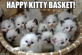 Happy Kitten Meme - happy kitty basket imgflip