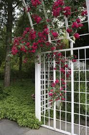 White Pvc Trellis 27 Garden Trellis And Lattice Ideas Wood U0026 Metal