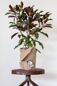 nasa clean air study u2013 crafty plants perth