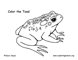 grassland community colouring pages 14043962 aufe us