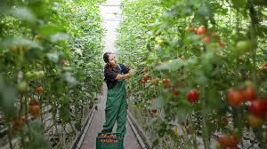 is indoor farming the future of appalachia food u0026 wine