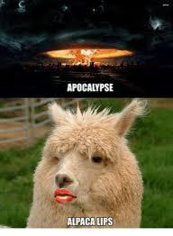Alpaca Meme - apocalypse alpaca lips alpaca meme on me me