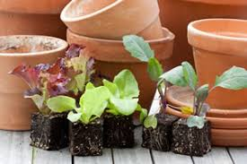 gem se pflanzen balkon obst und gemüse auf dem balkon anbauen tipps zum gemüseanbau