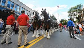 Budweiser Clydesdale Barn Famous Budweiser Clydesdales Coming Back To The Lehigh Valley This