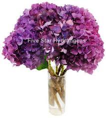 Purple Hydrangea Purple Fresh Wedding Hydrangeas By Five Star Hydrangeas