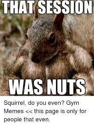 Best Gym Memes - 25 best memes about squirrels squirrels memes