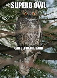 Superb Owl Meme - superb owl can see in the dark superb owl quickmeme