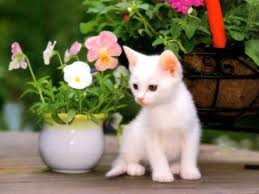 wallpaper cat whatsapp cute baby cats wallpapers group 76