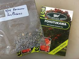 sharing seeds sunflowers out pohutukawa in u2013 cogdogblog