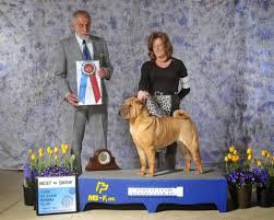 affenpinscher a donner dog show 2014 03 30