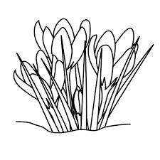 flower line art free download clip art free clip art on