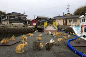 cat island japan u0027s cat island where the animals outnumber humans by six to