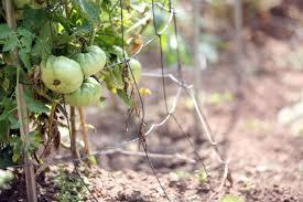 vegetable garden governor u0027s mansion governor nathan deal