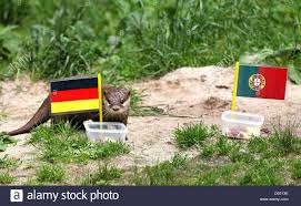 The Germany Flag By Choosing A Feeding Dish With The German Flag Over One Iwth The