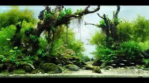 Aquascape Ponds Aquarium Aquascape Designs Aquascape Pond Aquascape Inc