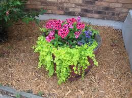 Summer Flower Garden Ideas - 22 best teresa garden ideas images on pinterest gardening