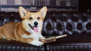 queen u0027s corgis are claims shock report