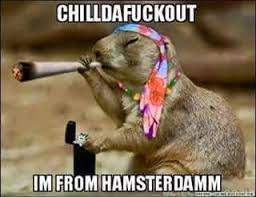 Stoned Dogs Meme - stoned hamster from hamsterdam animal weed memes