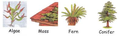 plant classifications flowering and non flowering for kids