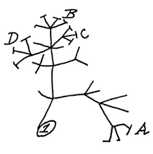 the human evolutionary tree origins of mankind