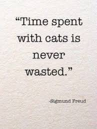 Awesome Quotes About Cats Being - behind every great person cat quotes pinterest cat and cat lovers