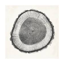 tree ring iii print by vision studio at