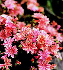 Image For Flowers Best 25 Most Beautiful Flowers Ideas On Pinterest Glowing