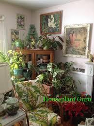 corner of my living room houseplants houseplants pinterest