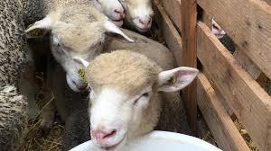 chambre d agriculture amiens les circuits courts une solution pour les éleveurs de la somme