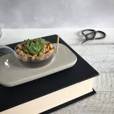 concrete terrarium succulent desk planter for plant lovers