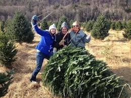christmas trees of vermont