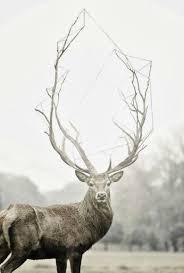 79 best deer antler images on deer antlers anatomy
