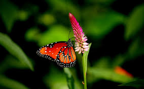 butterfly flower wallpaper butterfly flower plant 2560x1600 1027979 hd