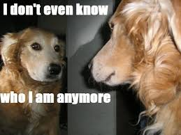Sad Dog Meme - 31 most funny sad pictures and photos