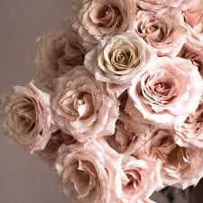 roses flowers flower moxie