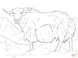 yak from india coloring page free printable coloring pages