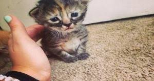 Depressed Cat Meme - how to cheer up a depressed cat cats 24 7 pinterest