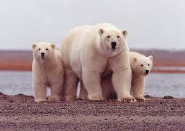 Alaska wild animals images U s fish and wildlife service open spaces blog jpg