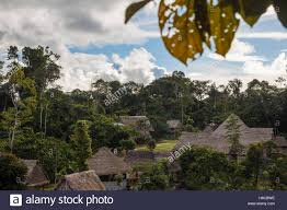 native plants in the amazon rainforest an ayahuasca plant medicine healing center and maloca in the