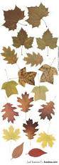 best 20 fall leaves images ideas on pinterest u2014no signup required