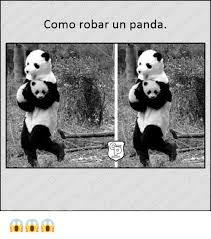 Memes De Pandas - como robar un panda meme on me me
