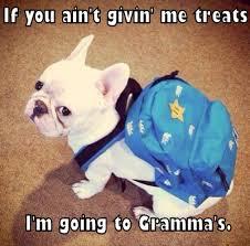 if you ain t giving me treats i m going to grandma s aww cute