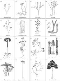 shoot and leaf evolution in plants philosophical transactions of