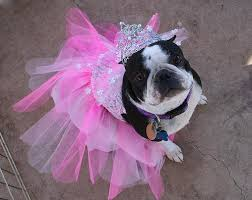 Halloween Costumes Dogs Cutest Puppy Costumes 2011 Pets Parade Dogs Cats Halloween Costumes
