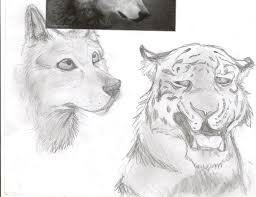 wolf and tiger sketches by dawnfrost on deviantart